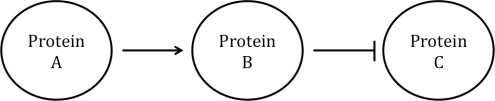 Protein Networks