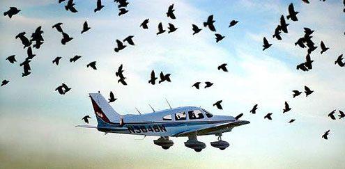 bird-airplane