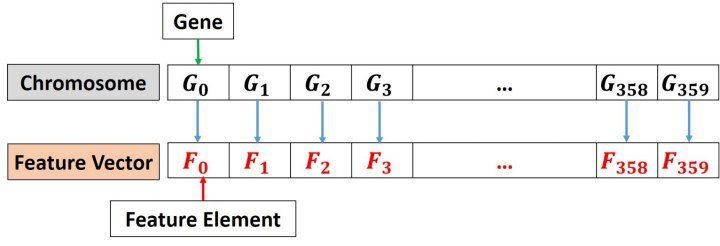 chromosome-representation