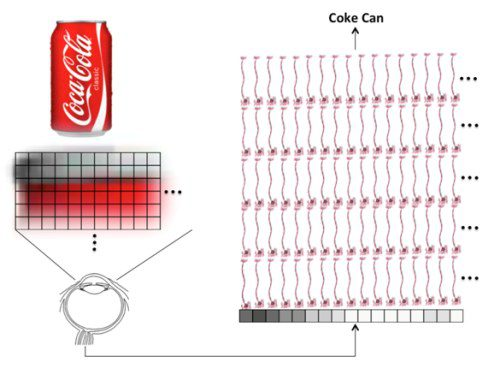 Coke Can - Human Vision