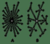 decentralization-diagram