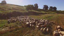 Follow herd