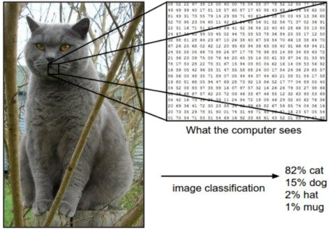 How Convolutional Neural Networks Accomplish Image Recognition?