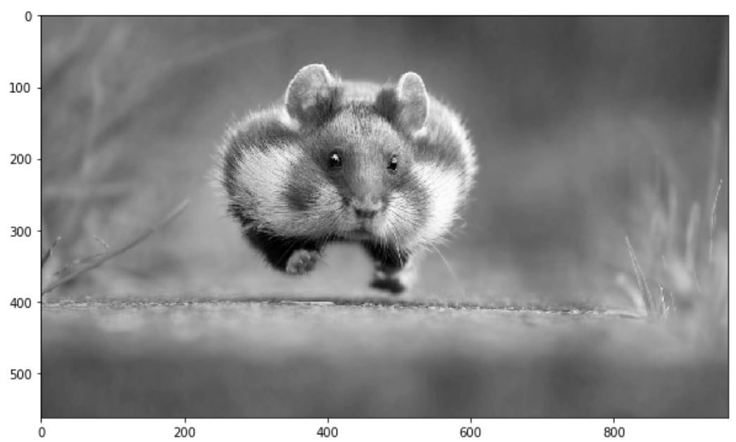 Basic Image Data Analysis Using Numpy and OpenCV – Part 1