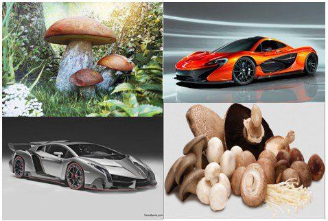 mushrooms-cars